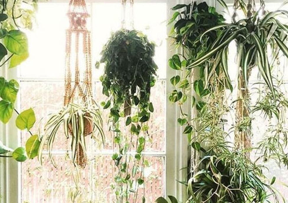 از بین بردن آفات گیاهان